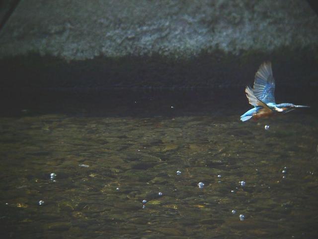 水面を飛ぶ3